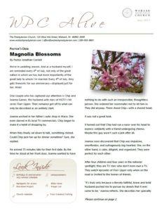 Newsletter 07.2017